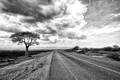 Young Baobab Tree | Mangochi | Malawi