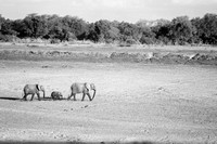 A Walk to Remember | South Luangwa National Park | Zambia