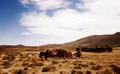 Lesotho Village